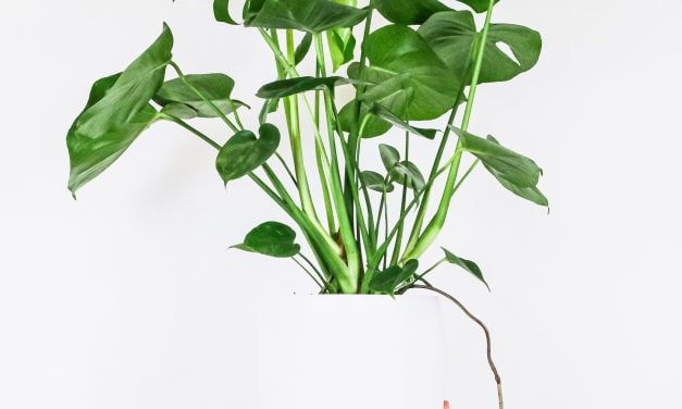 Caring for plants 1o1